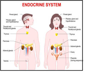 List Of Endocrine Diseases